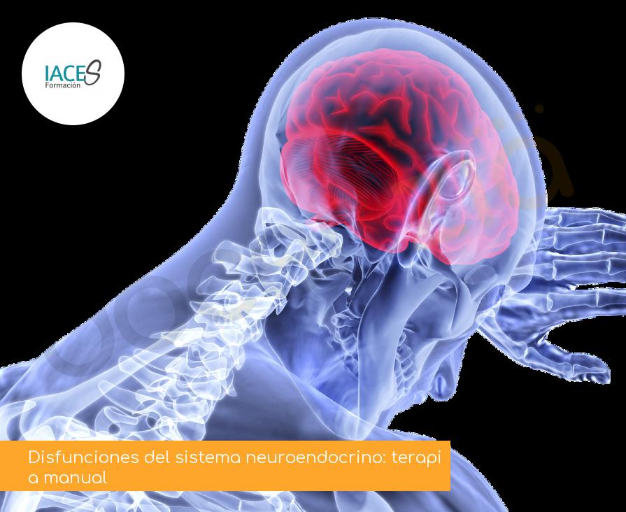 Disfunciones del sistema neuroendocrino: terapia manual